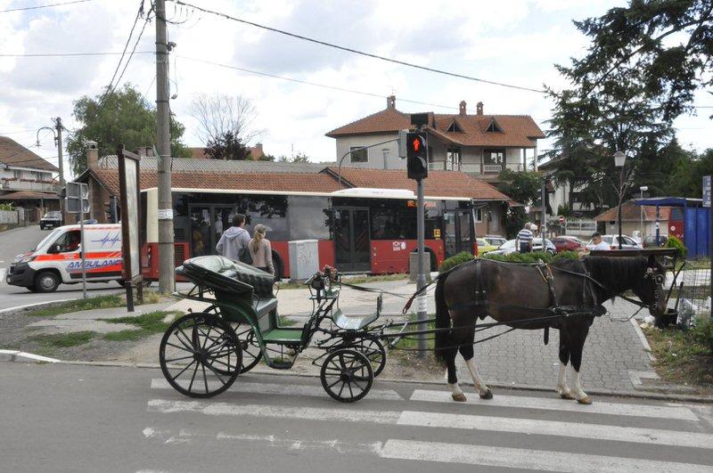 Излетници из Лазаревца у Гроцкој